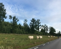 Nyhet: Cykelpaket i samarbete med Kvarnen i Hyssna